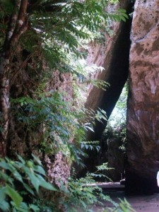 Entrée d'un bosquet sacré à Okinawa